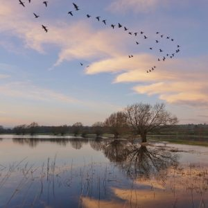 Gloucestershire Wildlife Trust Photo Competition